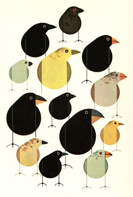 harper_birds